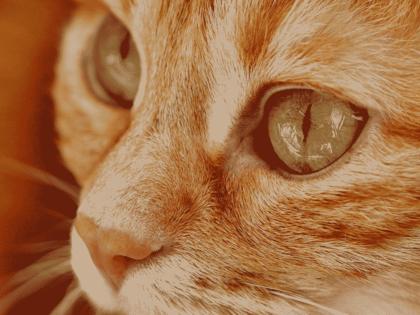 La stérilisation, condition sine qua non de l'arrêt de la prolifération des chats 4